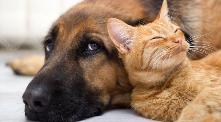 animales-domesticos-mascota